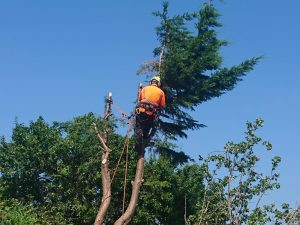 Tree Surgery Jobs - Careers - Full/Part Time Positions | Arb Safety UK